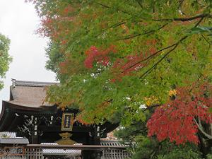 総門と色づくカエデ