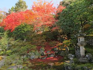 客殿南庭の紅葉