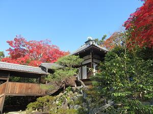 見上げる本堂と紅葉