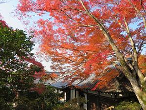 見下ろす本堂と紅葉
