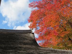 屋根と紅葉