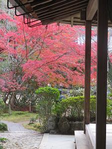 客殿廊下から見る紅葉