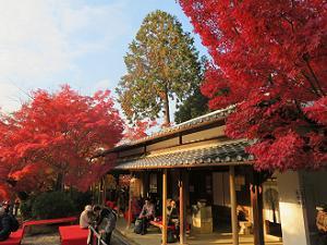 休憩処の紅葉