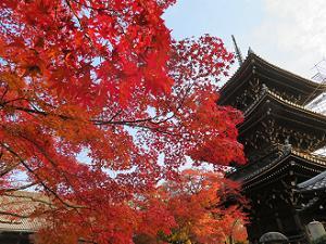 見上げる紅葉と三重塔