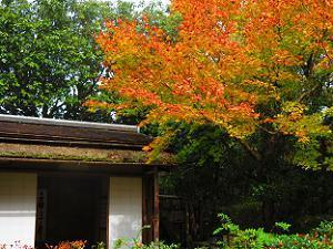 残月軒と紅葉