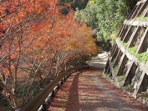 西明寺の裏参道の紅葉