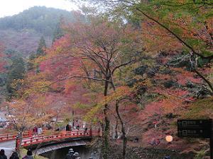 高雄橋と紅葉