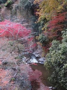白雲橋から見る紅葉