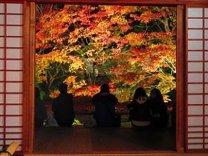 本堂から見る紅葉