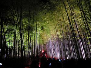 見上げる竹林