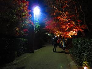 常寂光寺付近の紅葉