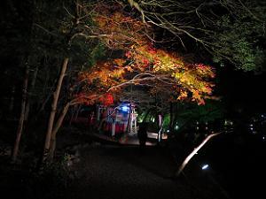 御神神社付近の紅葉