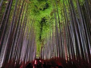 見下ろす竹林