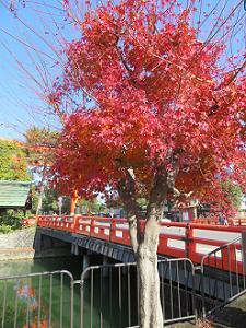 岡崎疎水の紅葉