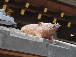 屋根の上のイノシシ