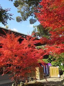 斎館前の紅葉