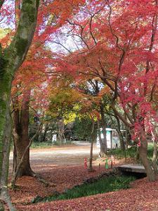 瀬見の小川と紅葉