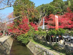 若王子橋付近の紅葉