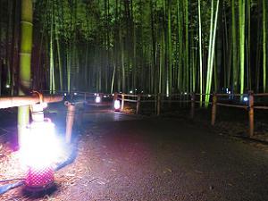 竹林の散策路