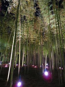 空に向かって伸びる竹