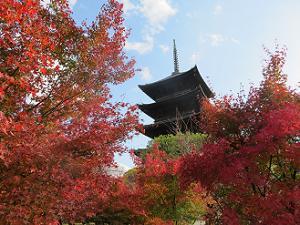 見上げる五重塔と紅葉