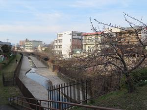 淀水路を見下ろす