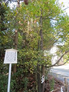 梛の記念植樹