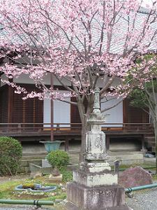宝篋印塔と蜂須賀桜