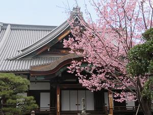 大殿と蜂須賀桜