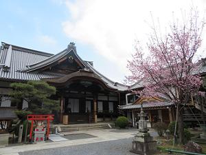 大殿と蜂須賀桜と空
