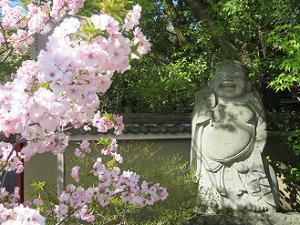八重桜と布袋さま