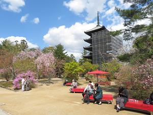 五重塔と桜とミツバツツジ