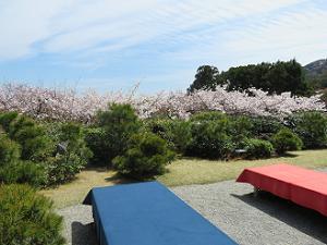床几台と桜