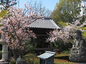 桜と鐘楼と石仏