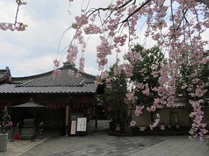 枝垂れ桜越しに見る地蔵堂