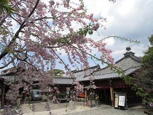 枝垂れ桜と地蔵堂