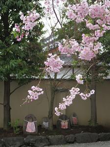 枝垂れ桜とお地蔵さま