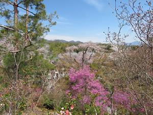 望京の丘からの眺め