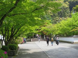 新緑と参道