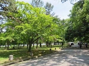 遊歩道わきの新緑