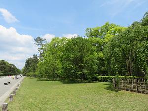 青空と新緑と芝生