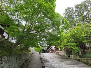 参道の新緑