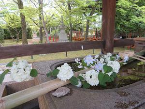 手水鉢に飾られた初夏の花