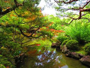 松とカエデと池