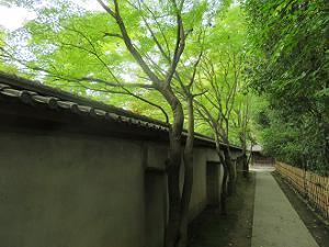 源氏庭の南側
