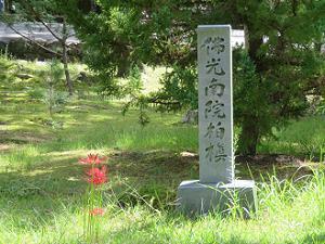 ヒガンバナと佛光南院柏槙の石碑