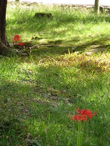 点々と咲くヒガンバナ