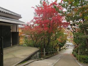 境内から見下ろす参道の紅葉
