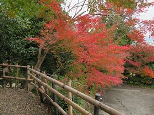 展望台から見る紅葉