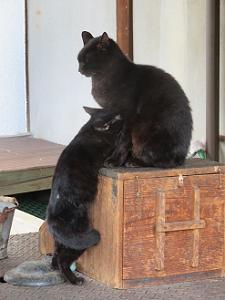 黒ネコの親子